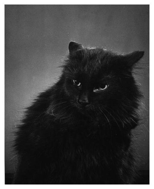aaablackcat