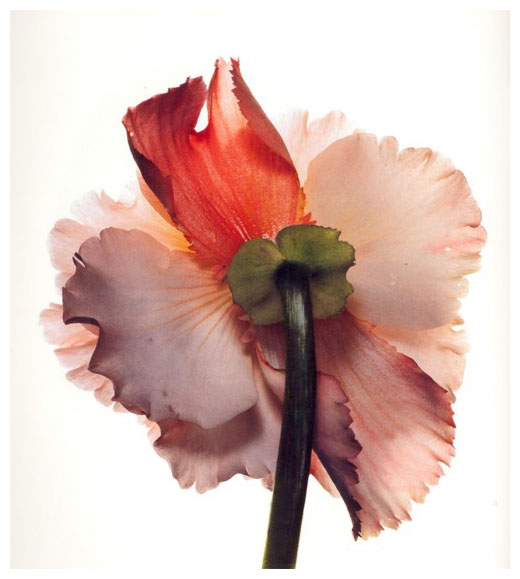 aaaback_flower