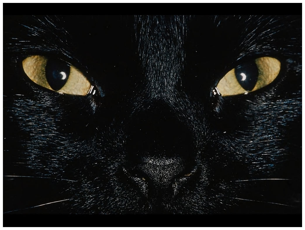 aaablack_cat_eyes
