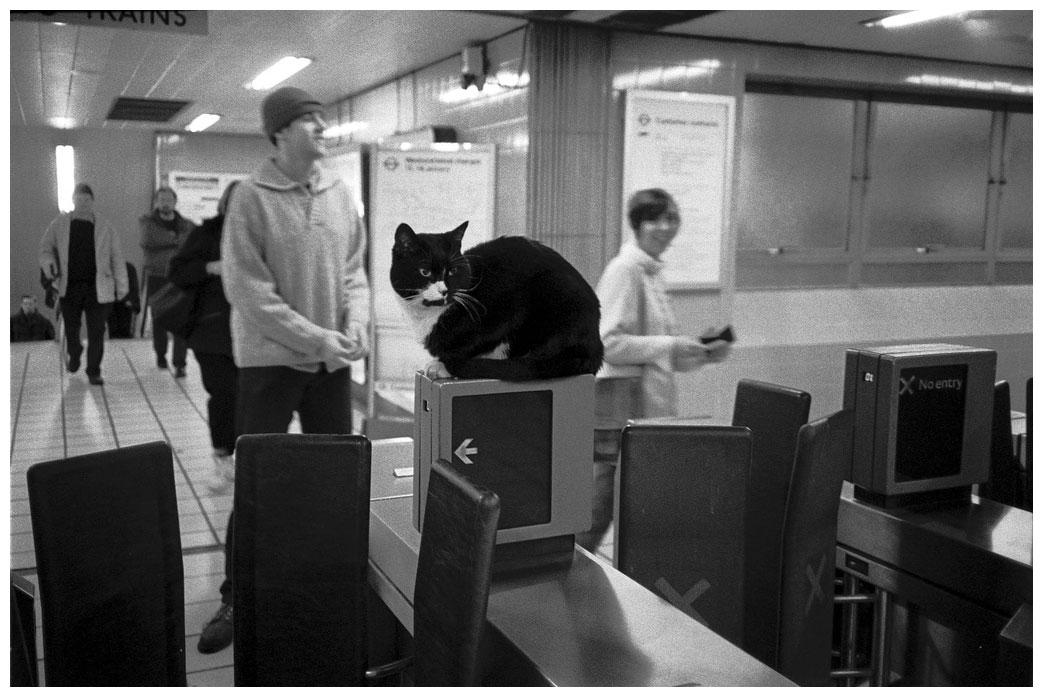 aaatube_cat